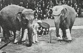 The Blind Men And The Elephant Analysis The Town That Hanged An Elephant A Chilling Photo And A Macabre
