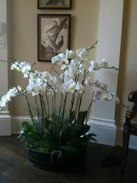 orchid arrangements orchid arrangement diy craft ideas orchid flowers