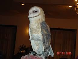 The Barn Owl Carol Stream 2005 Meetings