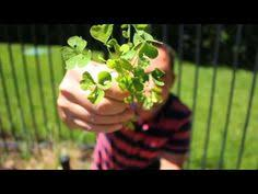 Frankie Flowers - diy rio tropical planter with frankie flowers youtube