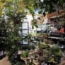 indoor sun shoppe 59 photos u0026 70 reviews home u0026 garden 160 n