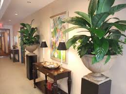 office plant designs kelly mac interiorscapes