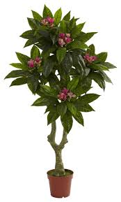 nearly 5 plumeria tree uv resistant indoor outdoor