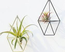 hanging air plant hanging air plants etsy
