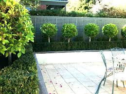 minimalist garden plans simple hedges ideas small trees u2013 home