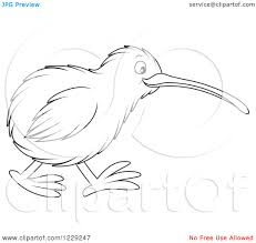 kiwi bird outline drawing pencil drawing collection
