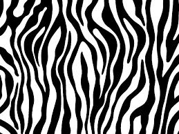 zebra print photo zebraprint jpg animal coloring pinterest zebra print photo zebraprint jpg