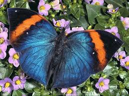 beautiful butterfly and flowers pictures