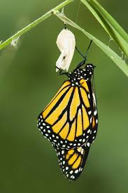 changing and growing animals butterflies lessons tes teach
