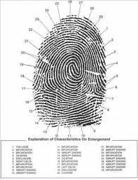fingerprint showing level 2features in detail provided by criminal