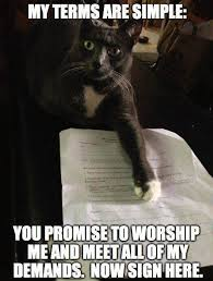 Funny Memes About Cats - my terms are simple cat meme cat planet cat planet