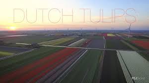 Netherlands Tulip Fields Dutch Tulips Fields 2016 In N Holland By Dji Inspire 1 Drone Youtube
