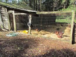farm day 2013 peafowl photos page 2 backyard chickens