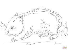 cute wombat coloring page free printable coloring pages