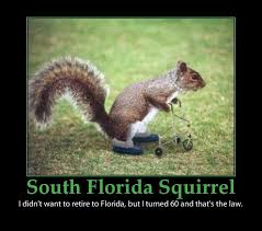 Funny Florida Memes - florida puns