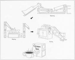 how green tea is made making used processing parts steps
