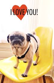 Pug Home Decor 88 Best Pugs Love Images On Pinterest Pug Love Animals And
