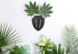 Most Fragrant Indoor Plants 6 Of The Best Indoor Plants For Your Home And How To Care For Them
