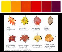 diy decorating warm fall colors