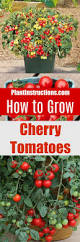 477 best gardening tomato u0026 veggies images on pinterest