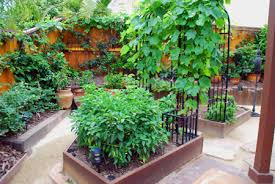 back yard projects including edible landscaping and garden layouts