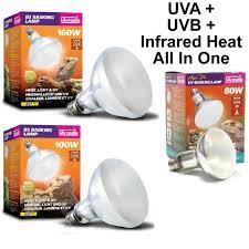 uva and uvb light arcadia reptile basking heat l uva uvb in one kettering koi