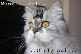 Meme Orly - hunting the orly owl bodybuilding com forums