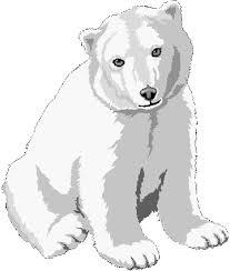 25 polar bears images polar bears white polar