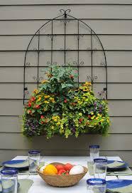 49 best herbs u0026 veggies in container gardens images on pinterest