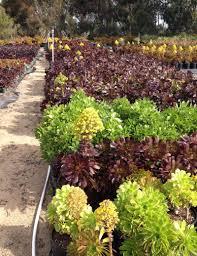 earth tones native plant nursery day 3 good earth nursery u2026wow petula