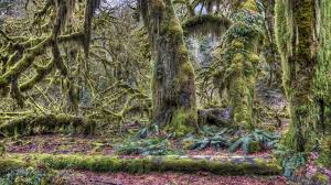 green lush rainforest covered trees with green moss city west