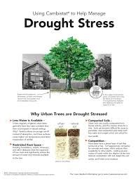 For A Tree Tree Care Mississippi Valley Tree Experts