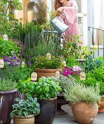 Potted Herb Garden Ideas How To Plant Herb Pots Growing Plants Herbs And Plants
