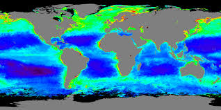 A World Map by A World Of Chlorophyll Image Of The Day