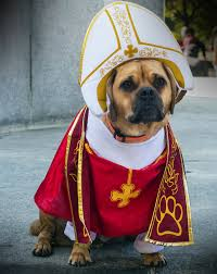 Dog Halloween Costumes Ira Glass Dog Amazing Dog Halloween Costume