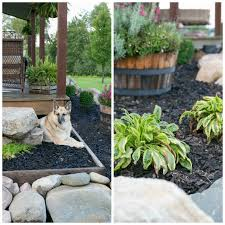 transferring potted plants into the soil before winter creative