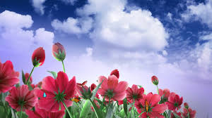 flower butterfly and cloud video background hd 1080p youtube