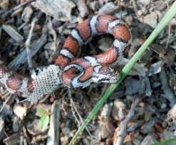 Snake In The Backyard by What To Do About Snakes The Humane Society Of The United States