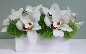 white orchids white orchids for the desk in az designs by zima