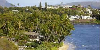 honolulu tree service company shares 3 common hawaiian tree