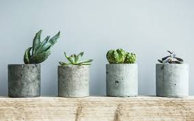 succulent planters 15 unique and creative succulent planter ideas garden lovers club