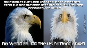 Murica Memes - murica memes best collection of funny murica pictures