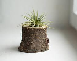 birch tree air plant holder birch log succulent pot rustic