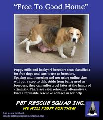 pet rescue squad inc animal cruelty intervention organization