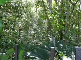 nottoway plantation floor plan historical southern antebellum plantations