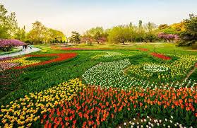 Beijing Botanical Garden Turns Beijing Into City Of Flowers 2 Chinadaily Cn