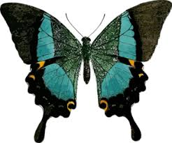 Blue And Green Butterfly - black and blue butterfly clip at clker com vector clip