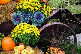preparing your yard for winter u2013 eden prairie lifestyle magazine