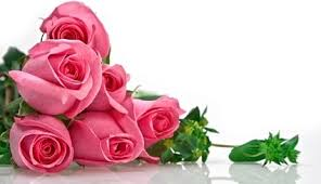 flowers roses pink flowers images free stock photos 12 789 free