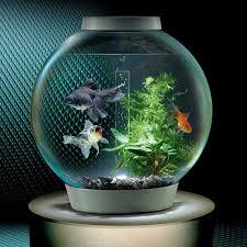 best 25 best aquarium fish ideas on tropical fish